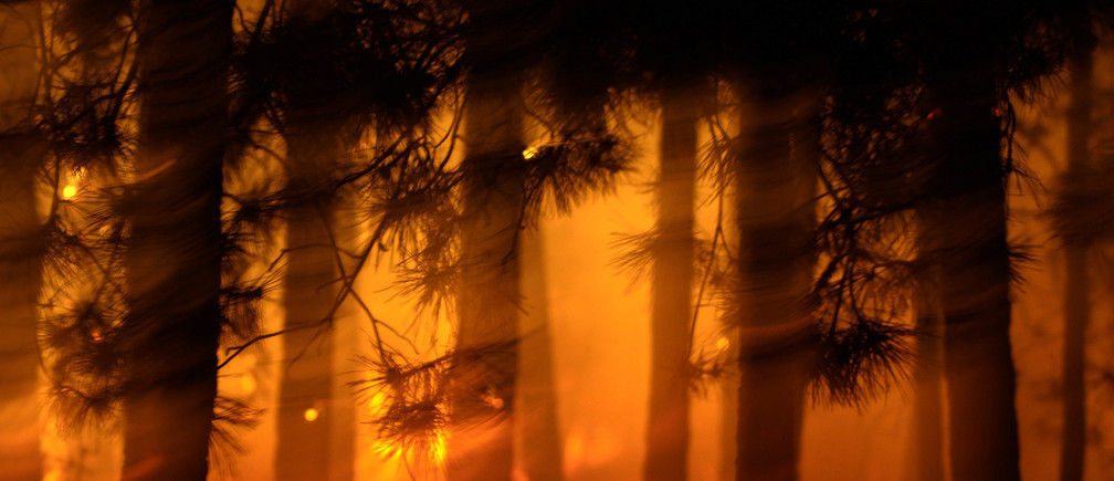 A fire rages in a pine wood forest near Bitola, 180 km (112 miles) south of Skopje, July 24, 2007.REUTERS/Ognen Teofilovski (MACEDONIA) - GM1DVTRMDAAA