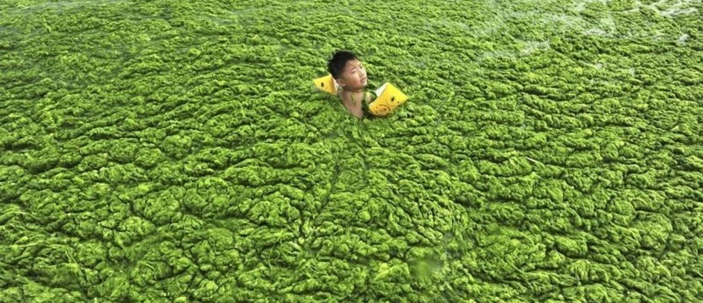 A boy swims in the algae-filled coastline of Qingdao, Shandong province July 15, 2011. Picture taken July 15, 2011. REUTERS/China Daily (CHINA - Tags: ENVIRONMENT SOCIETY SPORT SWIMMING IMAGES OF THE DAY) CHINA OUT. NO COMMERCIAL OR EDITORIAL SALES IN CHINA - GM1E77G1DIX01