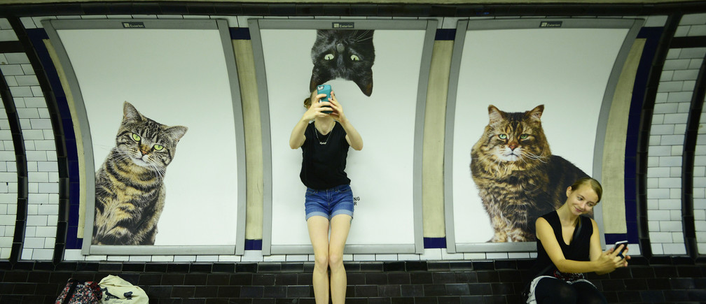 Commuters take selfies beside billboards showing photographs of cats inside Clapham Common underground station in London, Britain September 14, 2016. Some 700 people helped the Citizens Advertising Takeover Service (CATS) raise enough money to buy advertising space at the tube station, making it free from commercial adverts for two weeks.   REUTERS/Dylan Martinez - LR1EC9E10J9QA