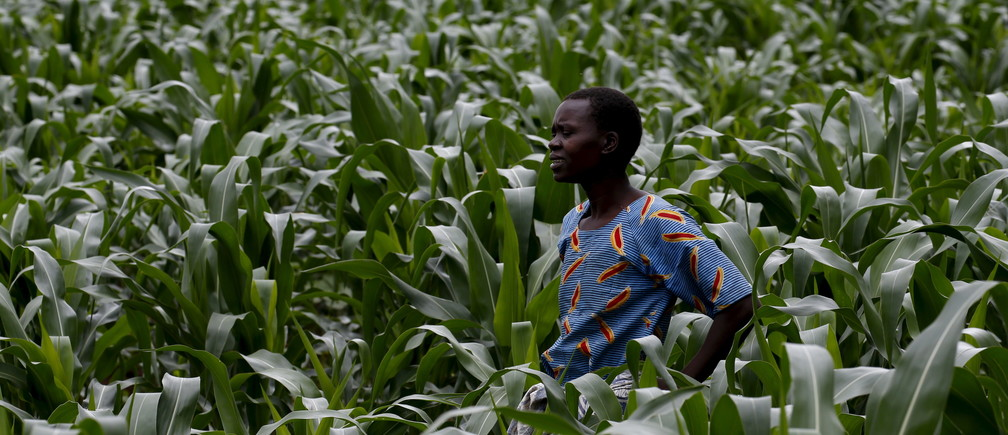 A Malawian subsistence farmer surveys her maize fields in Dowa near the capital Lilongwe, February 3, 2016. Late rains in Malawi threaten the staple maize crop and have pushed prices to record highs. About 14 million people face hunger in Southern Africa because of a drought  exacerbated by an El Nino weather pattern, according to the United Nations World Food Progamme (WFP). REUTERS/Mike Hutchings      TPX IMAGES OF THE DAY      - GF10000294670