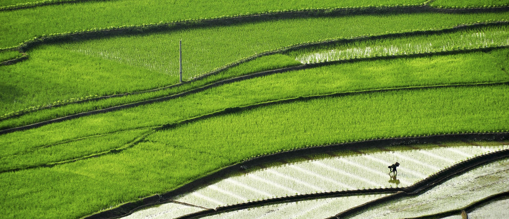 A farmer plants paddy on a terrace field in Suichuan county, Jiangxi province May 20, 2014. Picture taken May 20, 2014.