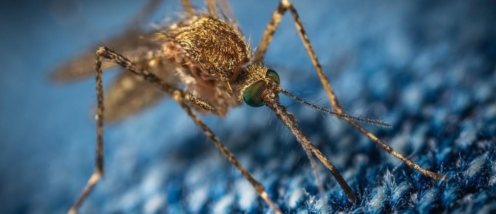 El 94% de todas las muertes por malaria se registraron en el África subsahariana en 2018.