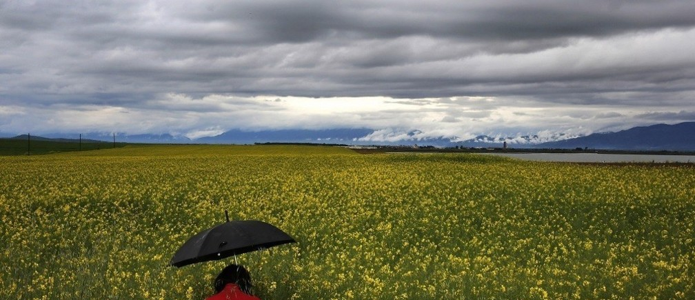 A woman walks through a field with bio-diesel in the north-eastern Greek region of Thrace near the town of Xanthi April 18, 2014. In the mid 80s Greece produced 400,000 tons of sunflower yearly, in 2005 this crop nearly disappeared. Therefore, the biofuel production presented as an opportunity to exploit 1,000,000 acres of uncultivated Greek land. From almost zero production in 2011 more than 1,000,000 acres of energy crops were cultivated attributing to the Greek countryside people more than 100.000.000 euros yearly.