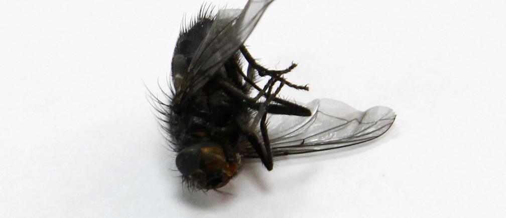A dead fly is seen on the windowsill of an office in Kiev March 27, 2012. REUTERS/Gleb Garanich (UKRAINE  - Tags: ANIMALS) - LR2E83S0VXU0E