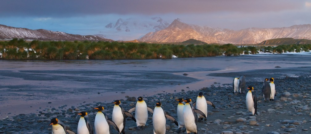 South Georgia hosts around 45% of the global breeding population of king penguins