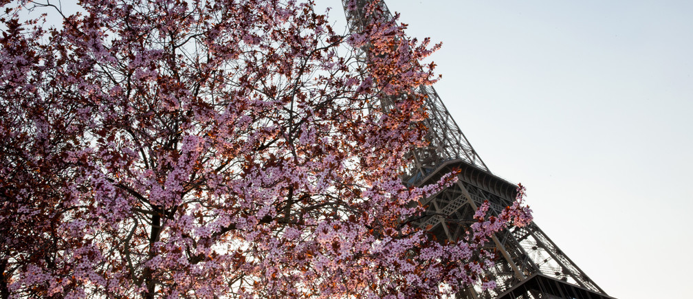 Tree blossoms frame the Eiffel Tower on a Spring day in heat spring summer nature trees plant biology environment renewable solar energy change transition friendly environment carbon footprint carbon emissions reduction change natural climate change global warming air pollution clean energy power renewable plastic plastics