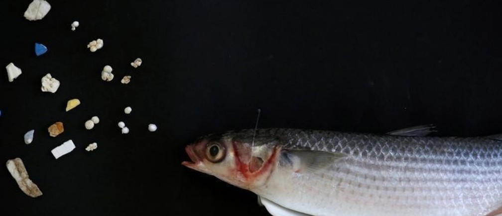 A grey mullet is shown next to microplastic found in Hong Kong waters during a Greenpeace news conference in Hong Kong, China, April 23, 2018. REUTERS/Bobby Yip  TPX IMAGES OF THE DAY - RC1E599A9FC0