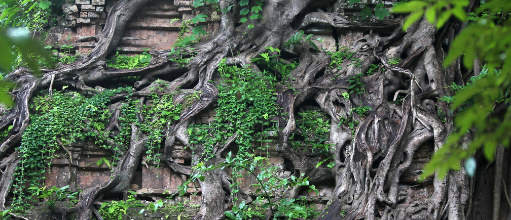 "Roots shroud a relief at Sambor Prei Kuk, or ""the temple in the richness of the forest"" an archaeological site of ancient Ishanapura, listed as a UNESCO world heritage site, in Kampong Thom province, Cambodia July 16, 2017. Picture taken July 16, 2017. REUTERS/Samrang Pring     TPX IMAGES OF THE DAY - RC1EE5619E00"