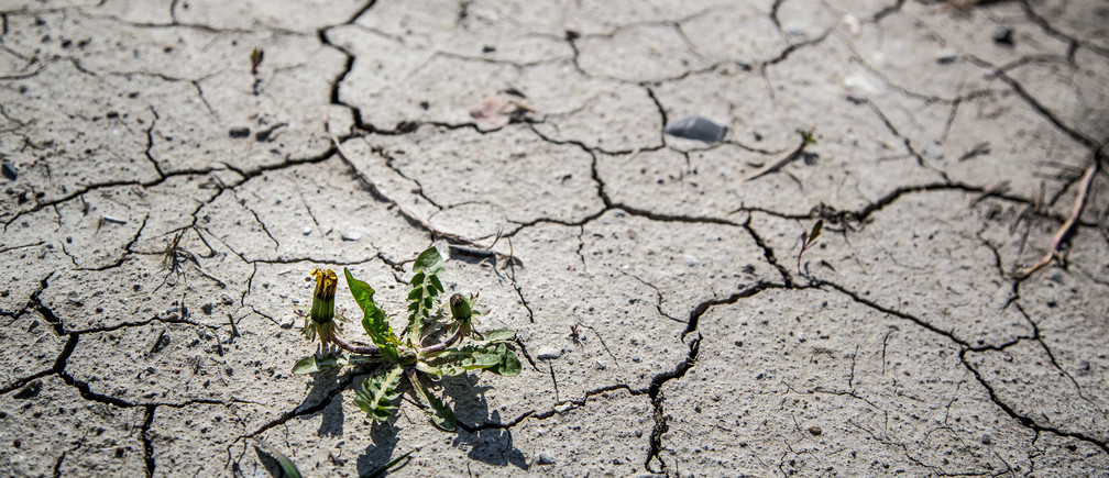 Dry soil is pictured, as only a few millimetres of rain has fallen in recent weeks, as the spread of coronavirus disease (COVID-19) continues, in Ringsted, Zealand, Denmark April 24, 2020. Mads Claus Rasmussen/Ritzau Scanpix/via REUTERS    ATTENTION EDITORS - THIS IMAGE WAS PROVIDED BY A THIRD PARTY. DENMARK OUT. NO COMMERCIAL OR EDITORIAL SALES IN DENMARK. - RC20BG9HM7UC
