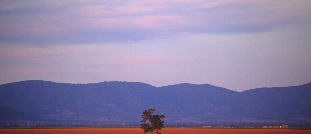 A lone tree can be seen in a drought-affected paddock on farmer Scott Cooper's property named 'Nundah' located on the outskirts of the central New South Wales town of Gunnedah in Australia, July 21, 2018. Picture taken July 21, 2018.    REUTERS/David Gray - RC1798DB63E0