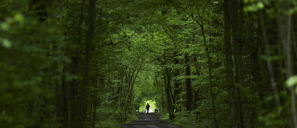 A woman walks with her greyhound dogs along a path in the Durand forest near the French border to Switzerland, in Ferney Voltaire April 28, 2014. REUTERS/Denis Balibouse (FRANCE) - RTR3MXS6