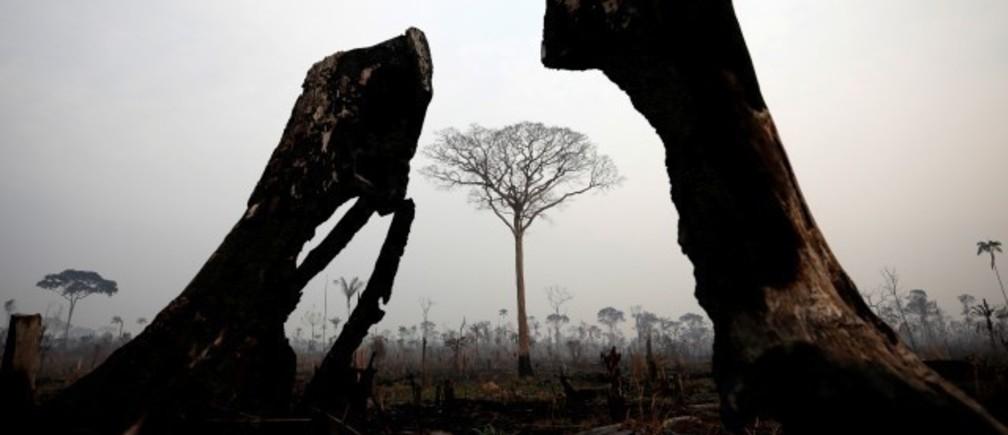 火災で燃えたボカ・ド・アクレのジャングル(8月24日、アマゾナス州で撮影)。資源管理の改善と排出ガスの抑制につながる森林再生は、事業としての投資リターンも良好で、アマゾンの森林火災が広がる中、注目を集めている。