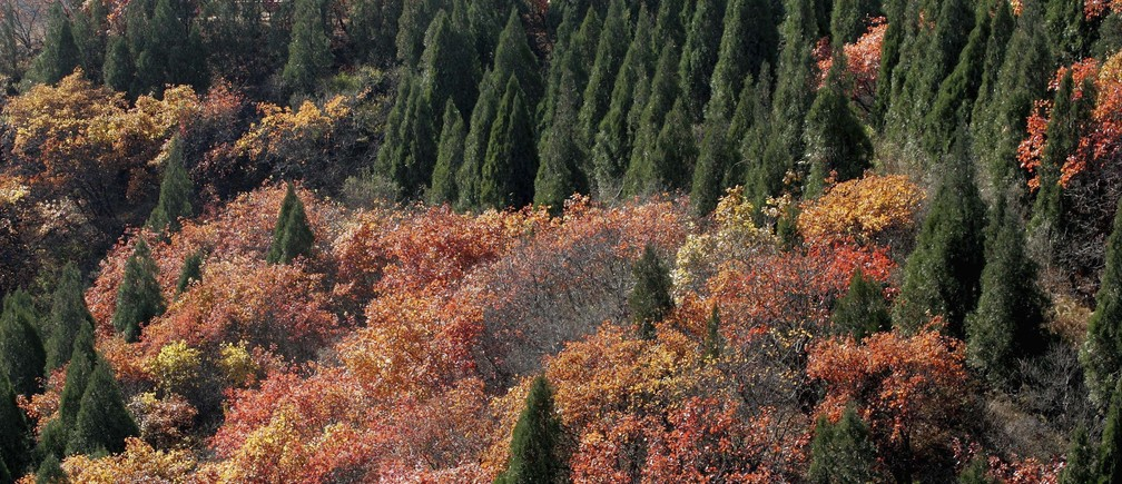 A general view of Badaling national forest park, north of Beijing, during a sunny autumn day on October 28, 2006.   REUTERS/Jason Lee (CHINA) - GM1DTUXLCWAA