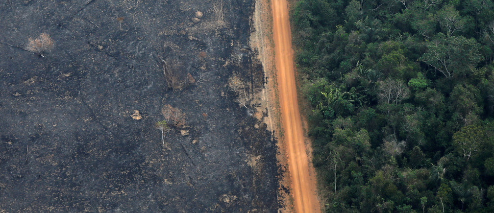 brazil deforestation economy global future