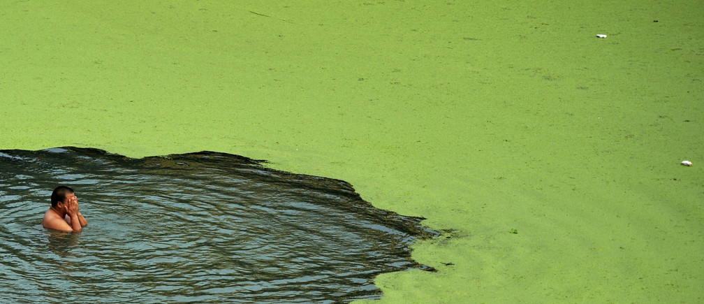 A man swims in algae-covered Han River in Wuhan, Hubei province June 11, 2014. Picture taken June 11, 2014. REUTERS/China Daily (CHINA - Tags: ENVIRONMENT DISASTER SOCIETY) CHINA OUT. NO COMMERCIAL OR EDITORIAL SALES IN CHINA - GM1EA6C1FWP01