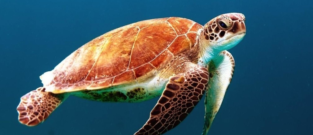 Amplias investigaciones han sugerido 10 lugares del océano que deben ser protegidos para apoyar la biodiversidad.
