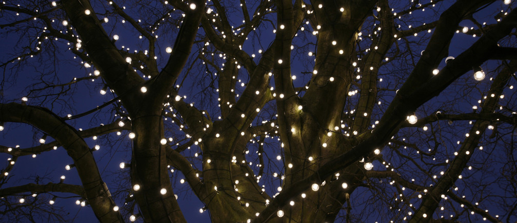 Light bulbs decorate a tree in central Malmo