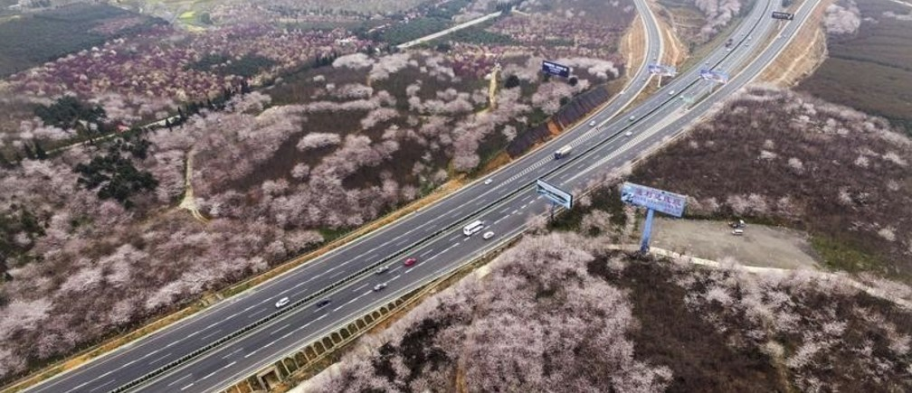Blooming flowers are seen along a highway in Guiyang, Guizhou Province, China, March 15, 2016.  REUTERS/Stringer ATTENTION EDITORS - THIS PICTURE WAS PROVIDED BY A THIRD PARTY. THIS PICTURE IS DISTRIBUTED EXACTLY AS RECEIVED BY REUTERS, AS A SERVICE TO CLIENTS. CHINA OUT. NO COMMERCIAL OR EDITORIAL SALES IN CHINA.  - GF10000347228