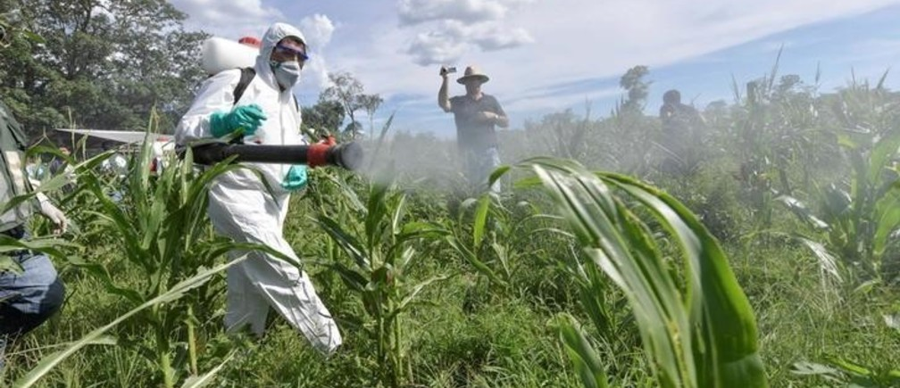 Bolivia's President Evo Morales (L) fumigates corn plants against locust plague in Yateirenda, in Santa Cruz, Bolivia, February 22, 2017. Freddy Zarco/Courtesy of Bolivian Presidency/Handout via REUTERSATTENTION EDITORS - THIS IMAGE WAS PROVIDED BY A THIRD PARTY. FOR EDITORIAL USE ONLY.