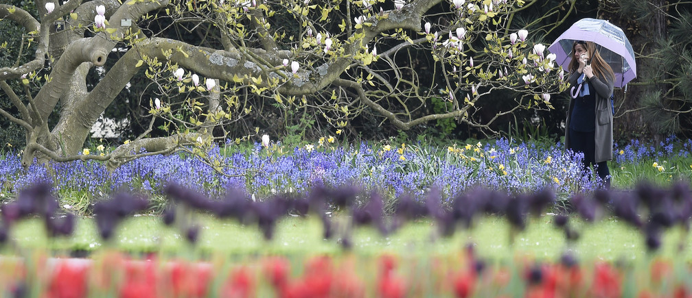 A visitor views spring flowering and blossoming plants and trees at Kew Gardens in west London, Britain, April 27, 2016.