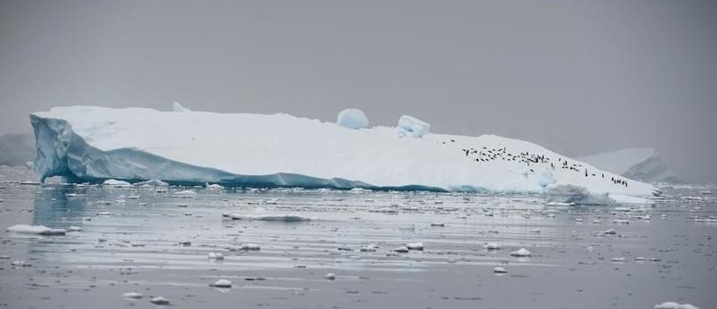 An iceberg floats in Andvord Bay, Antarctica, February 14, 2018. REUTERS/Alexandre Meneghini - RC17D9288DB0