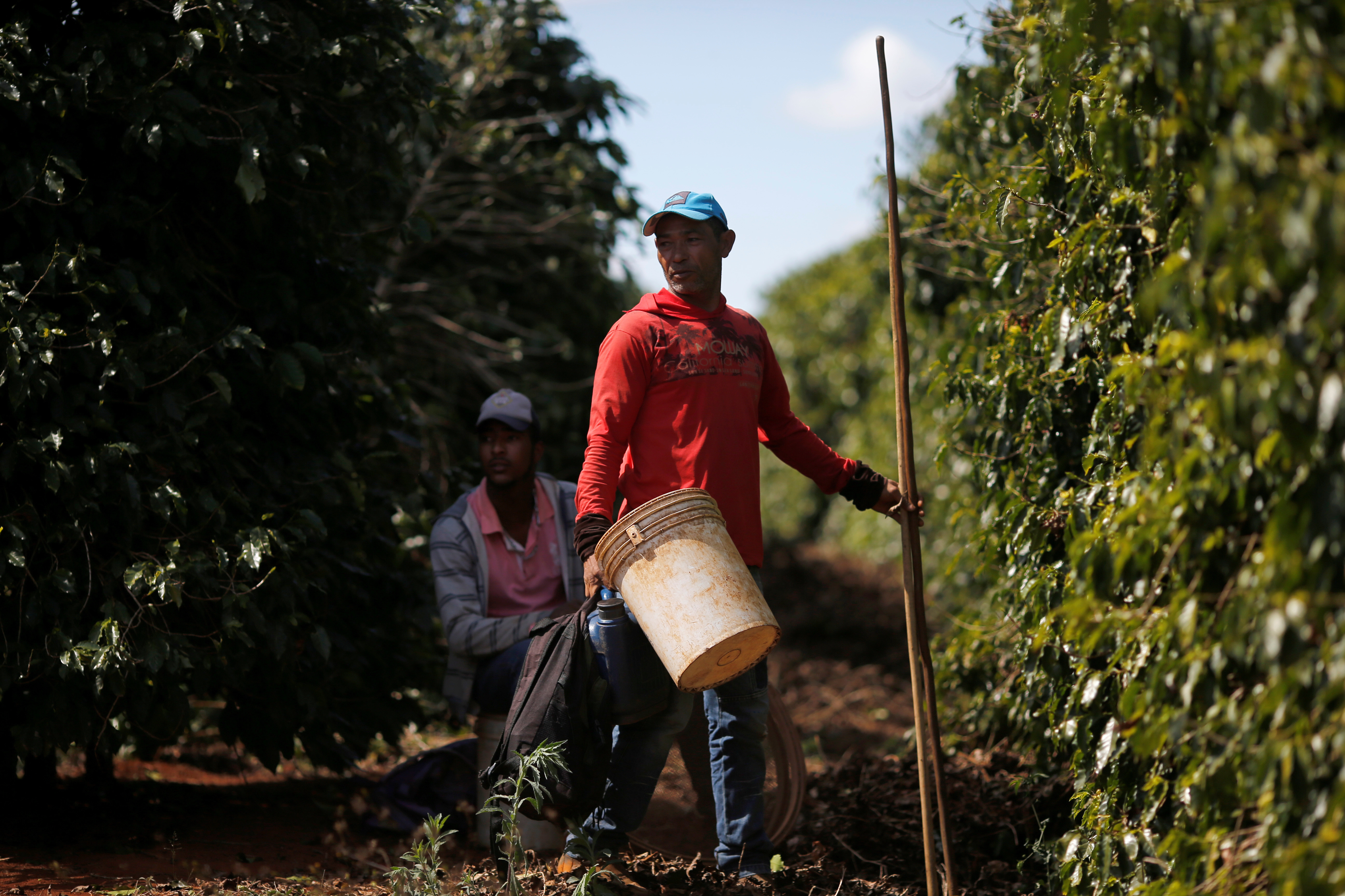 Two coffee bean workers attend to their crops.