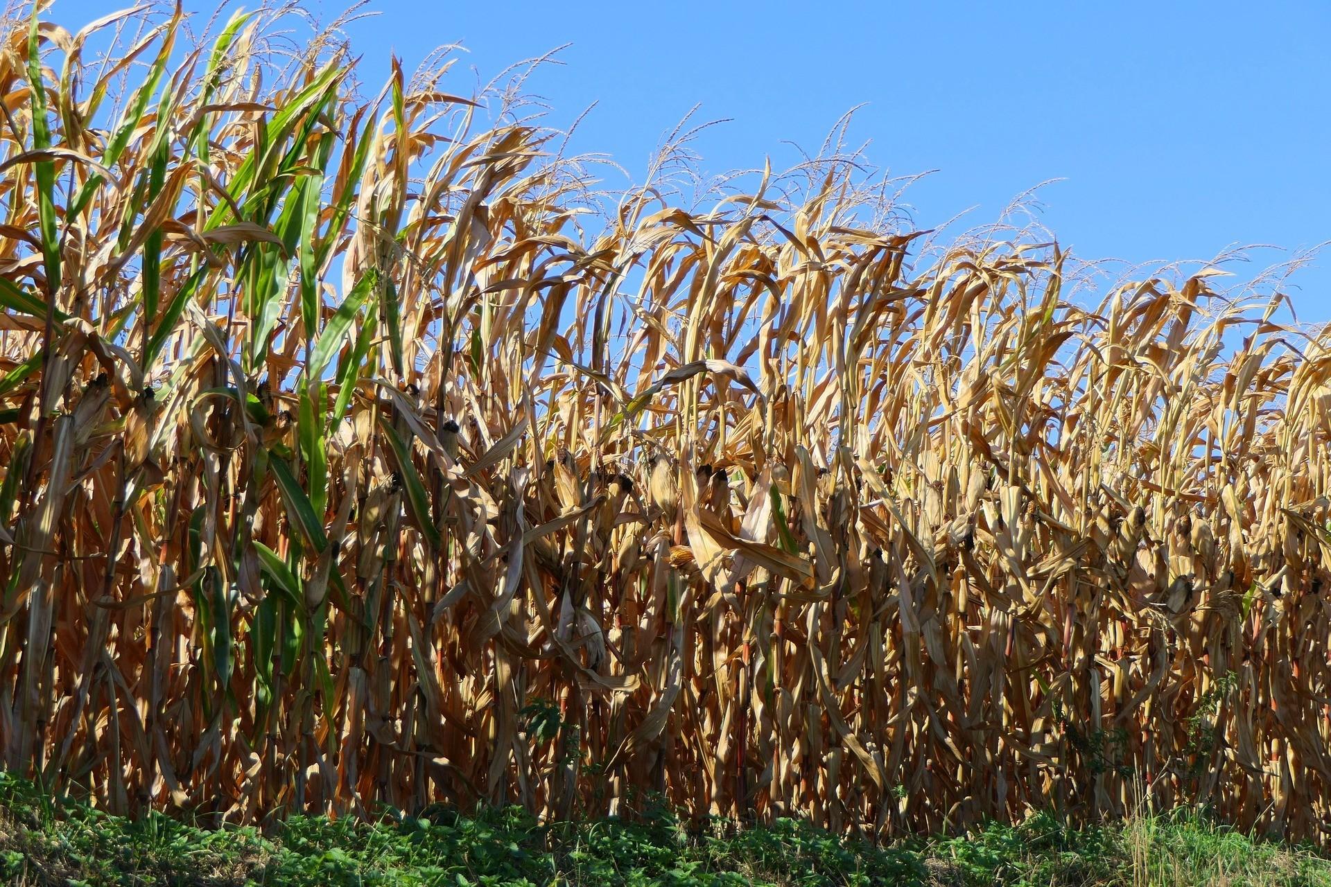 image of crops being grown
