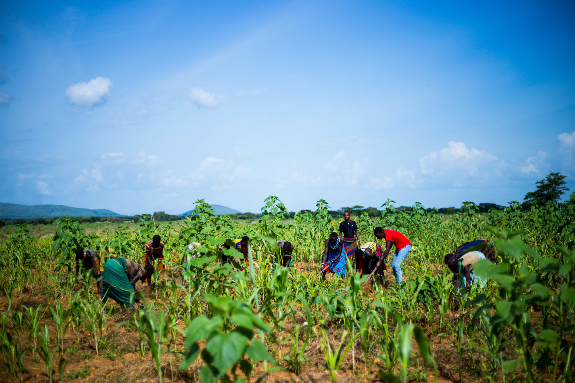 Young people planting trees in the Karamoja District of Uganda