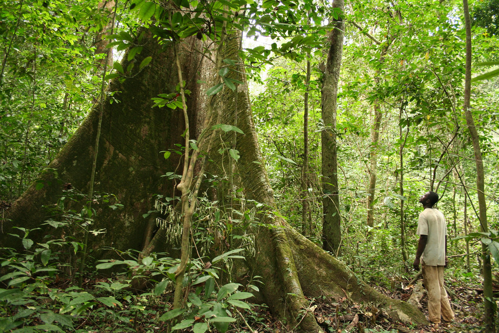 preserve-africa-forest