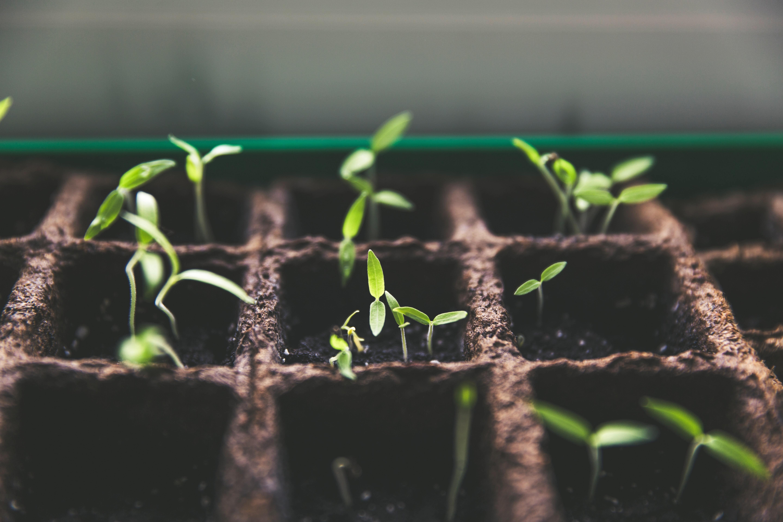 ESG green shoots latin america