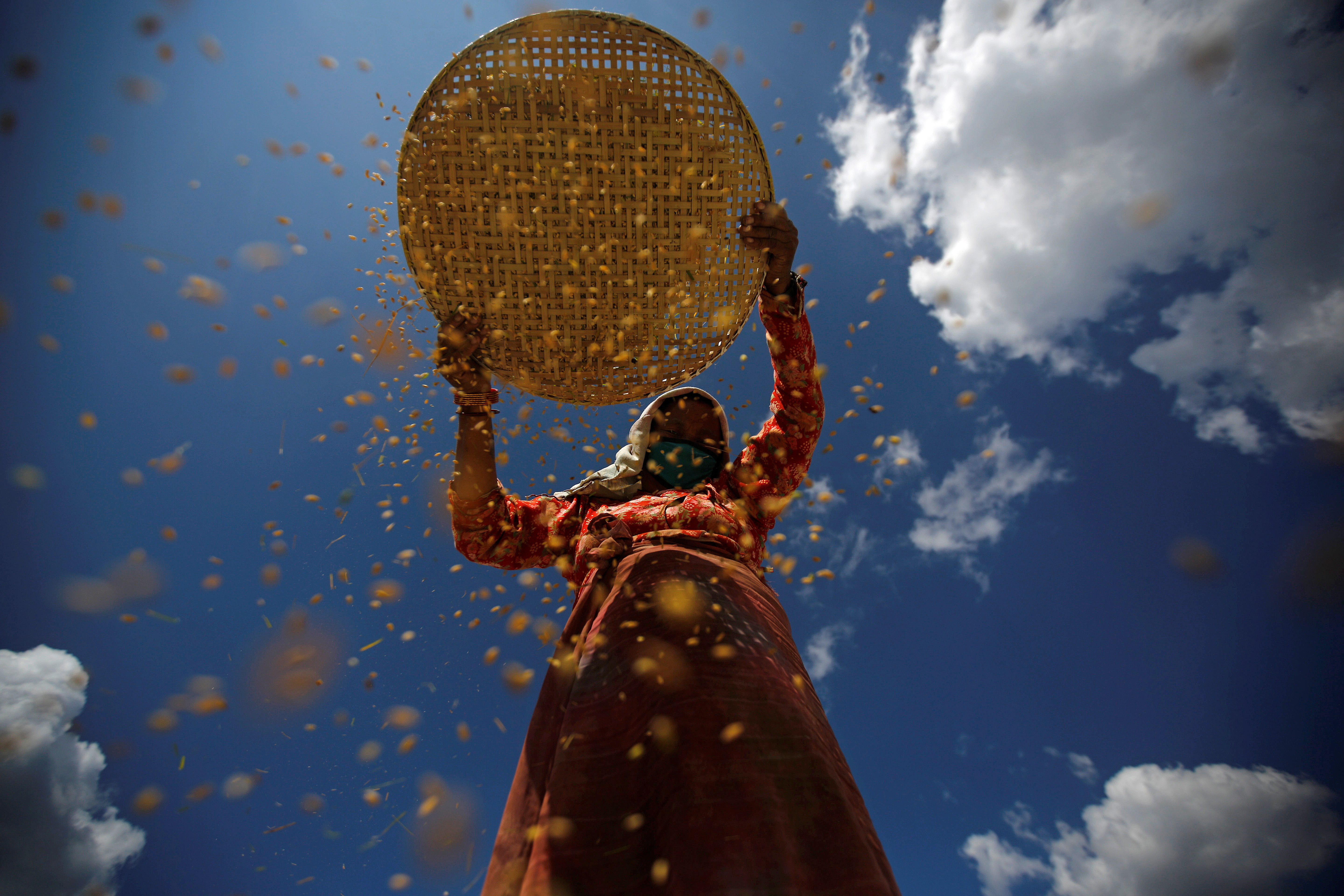 A farmer harvests rice on a field in Lalitpur, Nepal October 26, 2016. REUTERS/Navesh Chitrakar     TPX IMAGES OF THE DAY      - D1BEUJDWLRAA