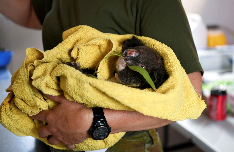 Australia's bushfires impacted over 3 billion animals