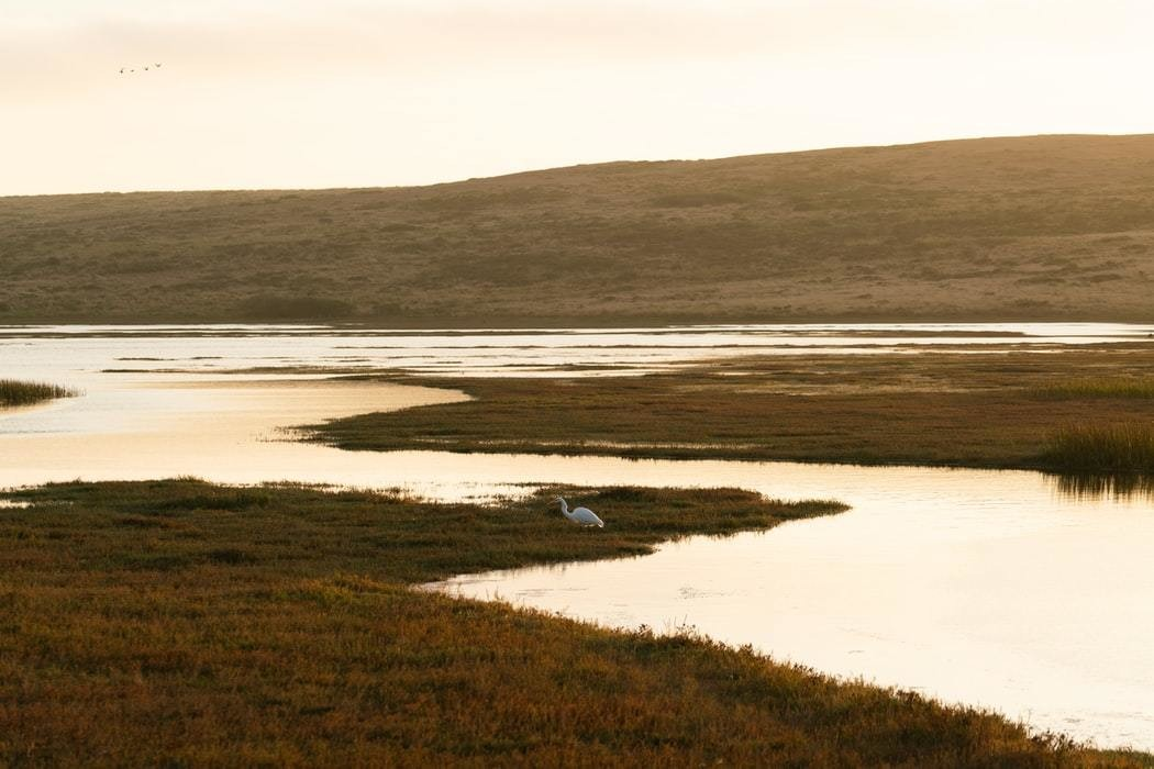 Visiting wetlands can boost your mental health