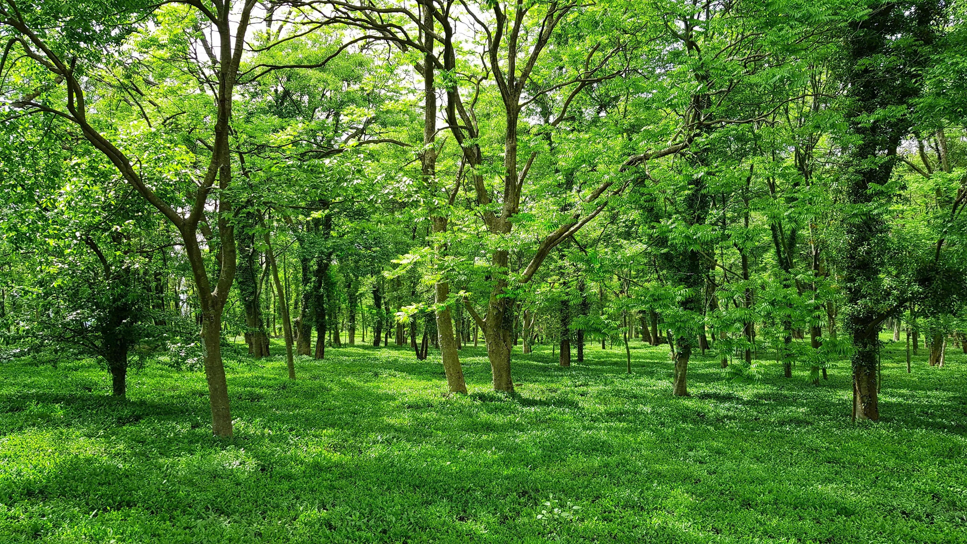 trees like these ones can be financed and supported by green bonds