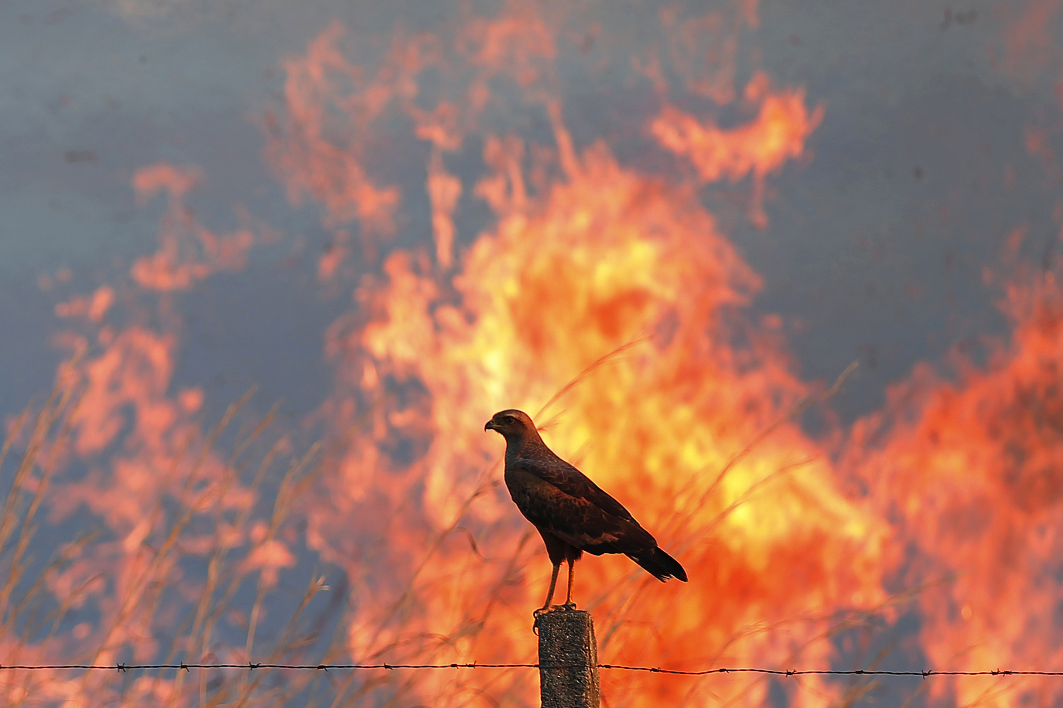 A bird perches on a post as a wildfire burns in the background, near the Sobradinho neighbourhood in Brasilia September 12, 2014. Drought, high temperatures and areas of low humidity have caused fires to start at several places in Brasilia, according to the fire-fighters putting out the blazes.