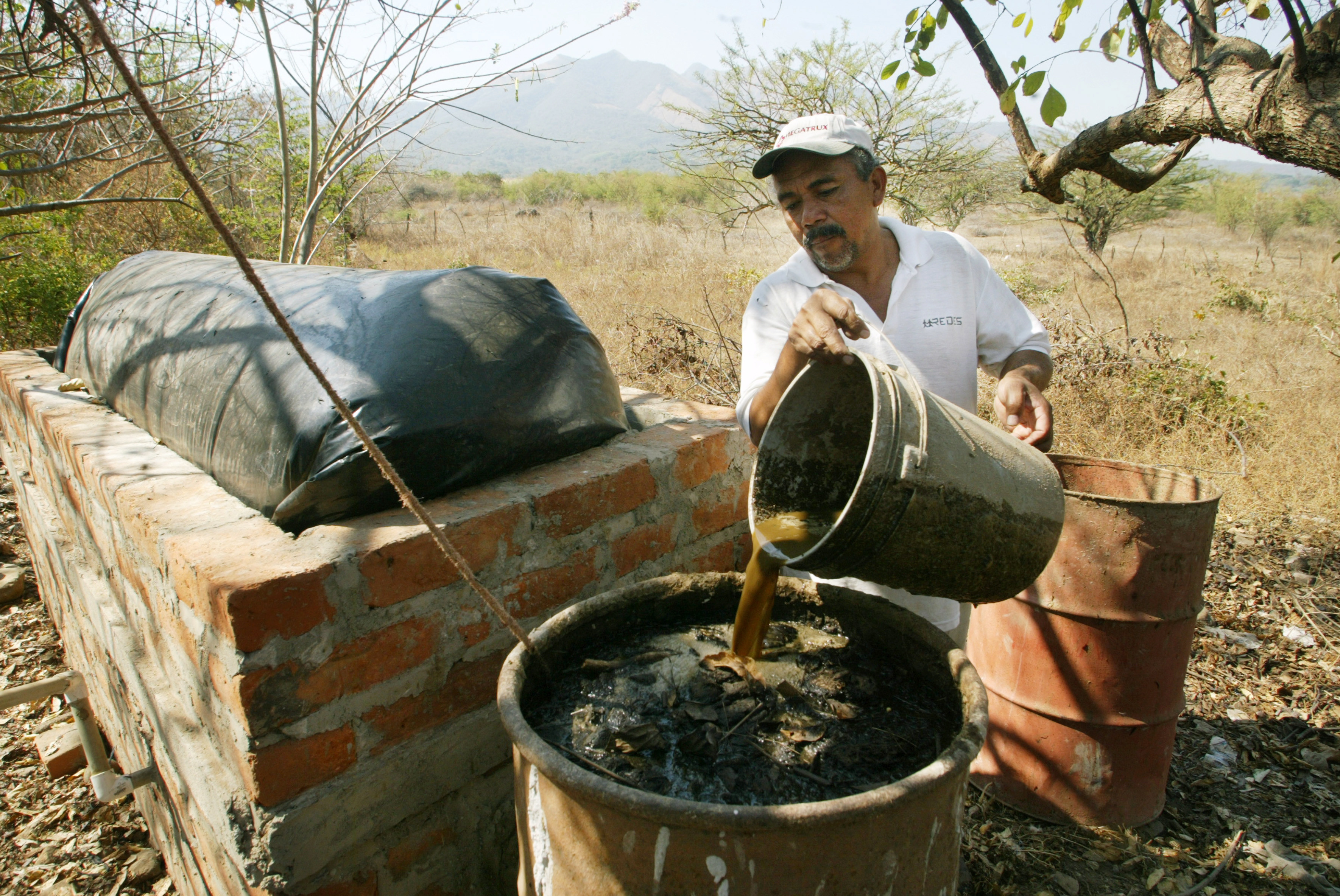 How is cow dung helping to eliminate poverty? | World