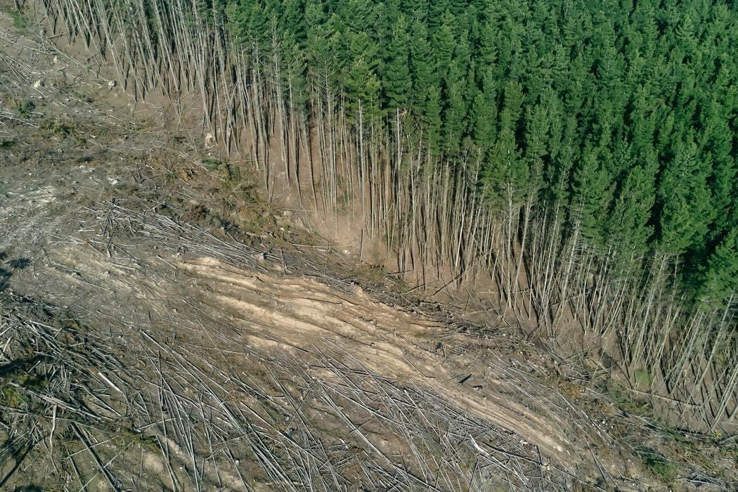 image of deforestation in Australia