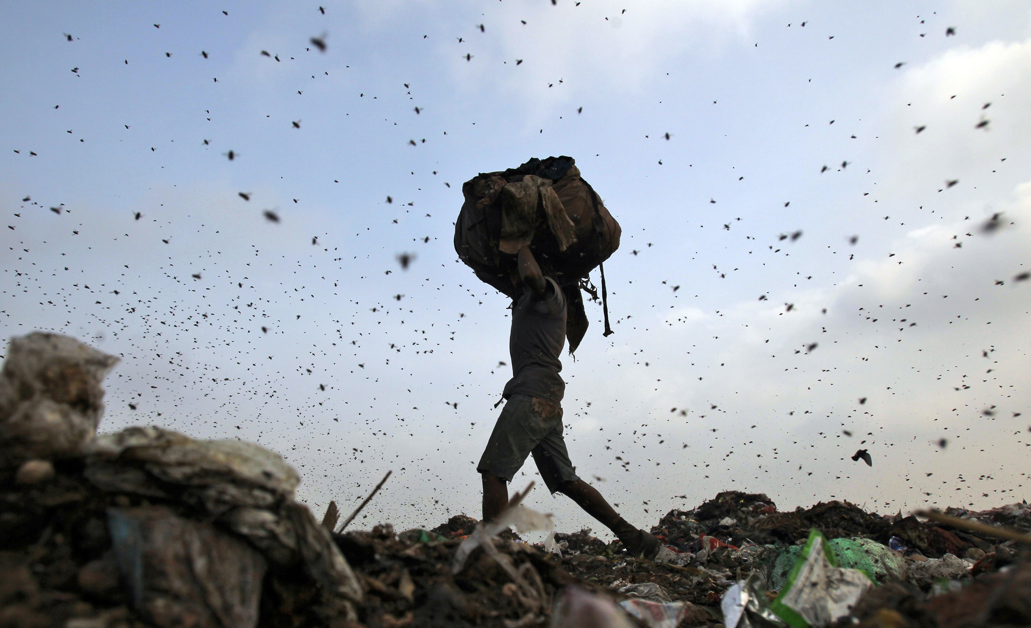 Insects and birds fly in a dump yard as a rag picker collects scraps in New Delhi June 27, 2013. REUTERS/Anindito Mukherjee (INDIA - Tags: ENVIRONMENT SOCIETY TPX IMAGES OF THE DAY POVERTY) - GM1E96R13TG01
