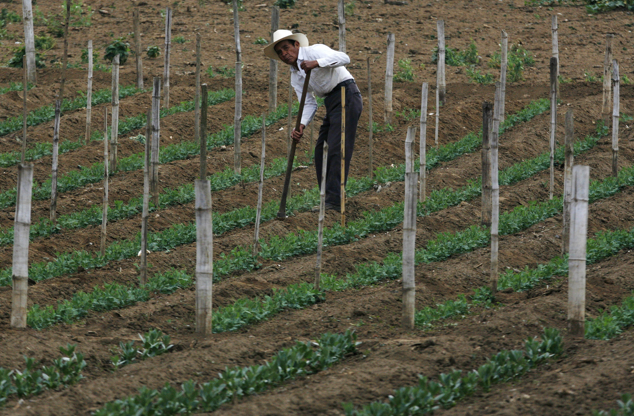A farmer tends his crops in Tecpan, Guatemala May 5, 2008. Many small scale farmers in Central America are being forced reduce the amount they plant due to the high cost of chemical fertilizers, which use petroleum as a base. To go with CENTAM/FOOD. REUTERS/Daniel LeClair  (GUATEMALA) - GM1E4570PDT01