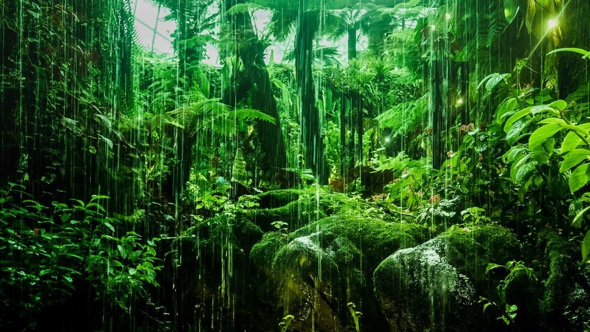 image of a forest in Singapore.
