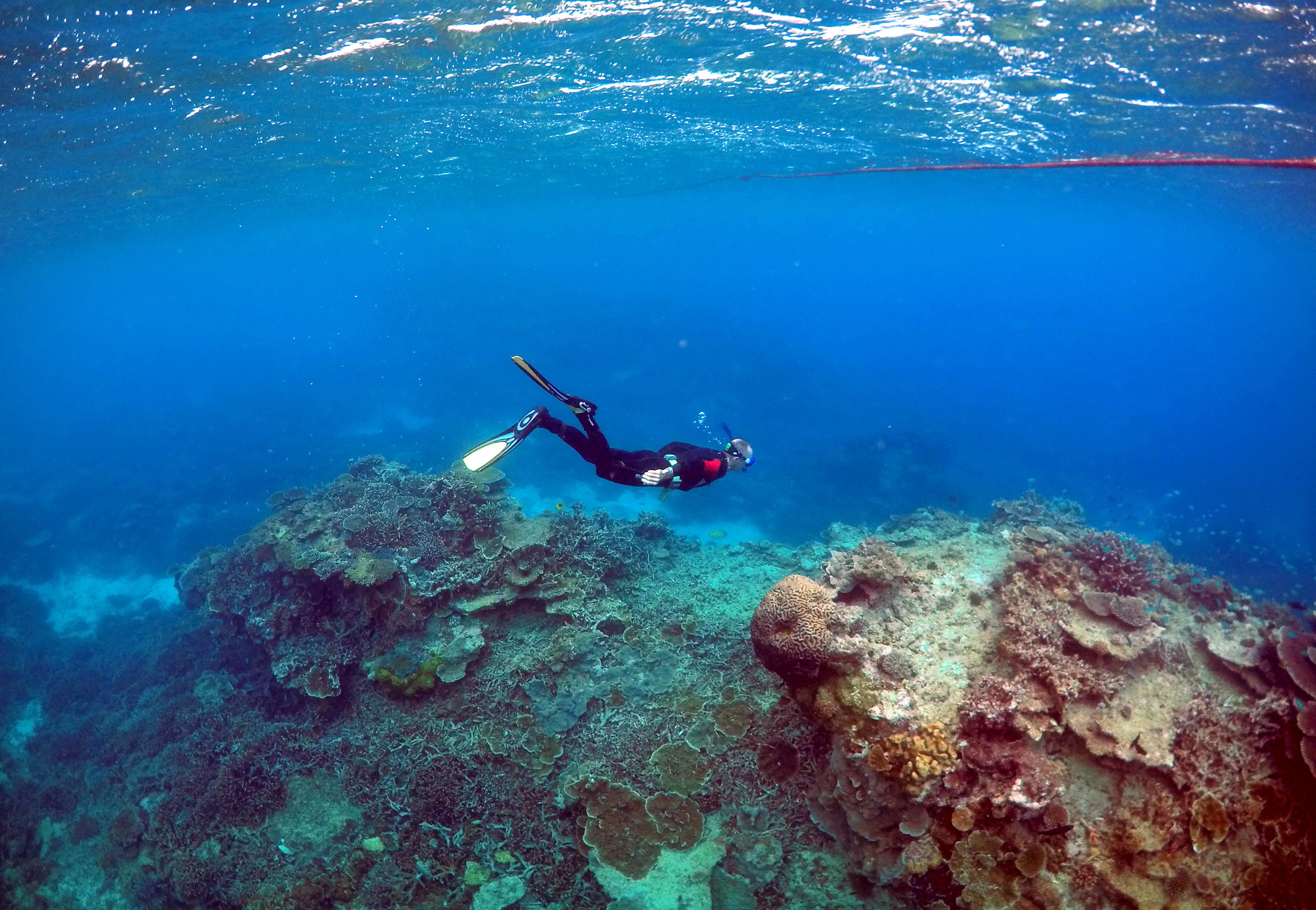 A photograph taken underwater of a diver swimming over a coral reef.