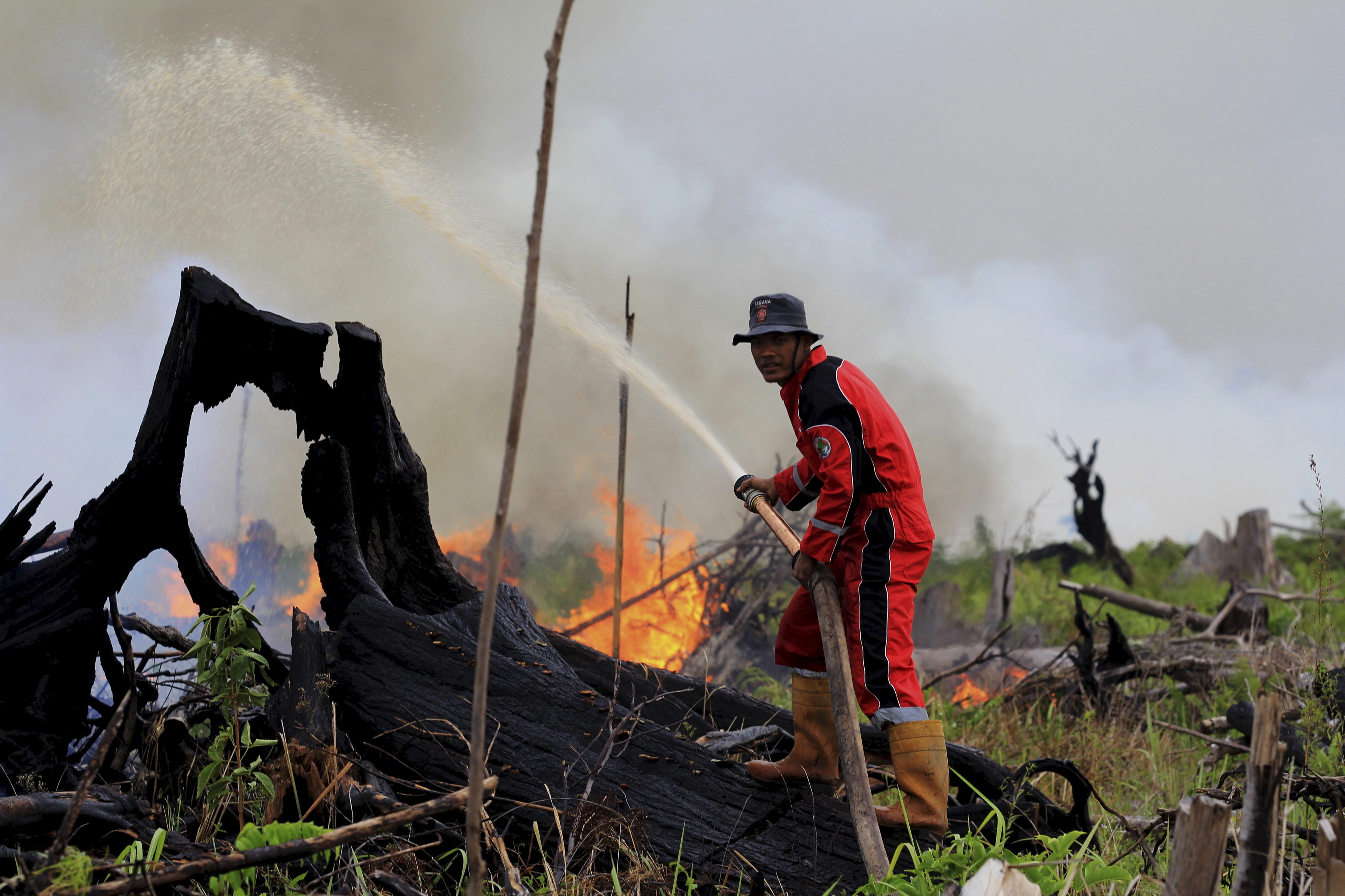 A fire fighter tries to put out a fire on land intended for a palm oil plantation in the village of Tanjung Palas, Dumai, Riau province, Sumatra, Indonesia in this photo taken by Antara Foto on March 5, 2016. Indonesia's western province of Riau has declared a state of emergency over forest and land fires blazing on the island of Sumatra, a government official said on Tuesday. Picture taken March 5, 2016.REUTERS/Aswaddy Hamid/Antara Foto ATTENTION EDITORS - THIS IMAGE HAS BEEN SUPPLIED BY A THIRD PARTY. IT IS DISTRIBUTED, EXACTLY AS RECEIVED BY REUTERS, AS A SERVICE TO CLIENTS. FOR EDITORIAL USE ONLY. NOT FOR SALE FOR MARKETING OR ADVERTISING CAMPAIGNS. MANDATORY CREDIT. INDONESIA OUT. NO COMMERCIAL OR EDITORIAL SALES IN INDONESIA. - GF10000337622