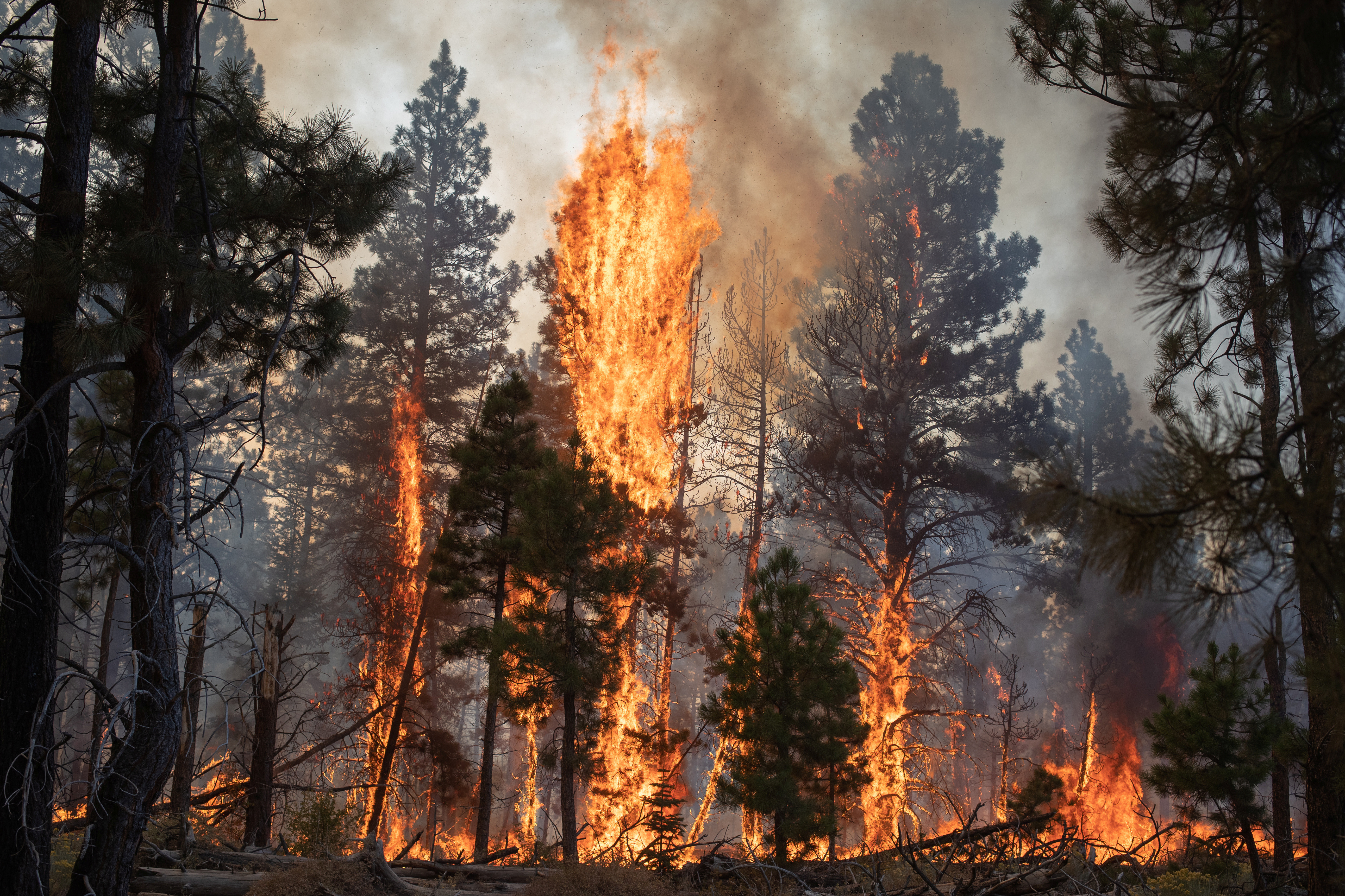 Trees are ablaze from the Brattain Fire in the Fremont National Forest near Paisley, Oregon, U.S., September 19, 2020. REUTERS/Adrees Latif - RC212J98TFVQ