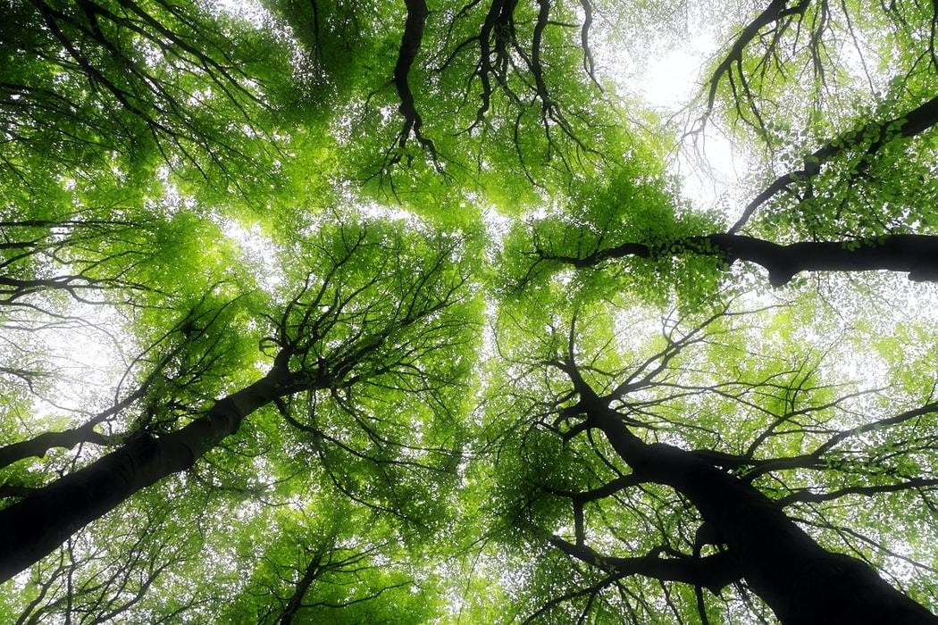 5 facts you might not know about why forest biodiversity matters