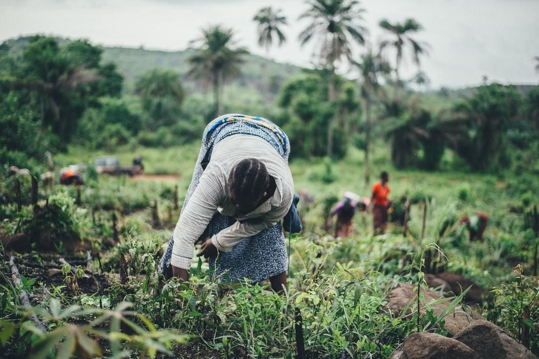 image of women farming cassava in Sierra Leone