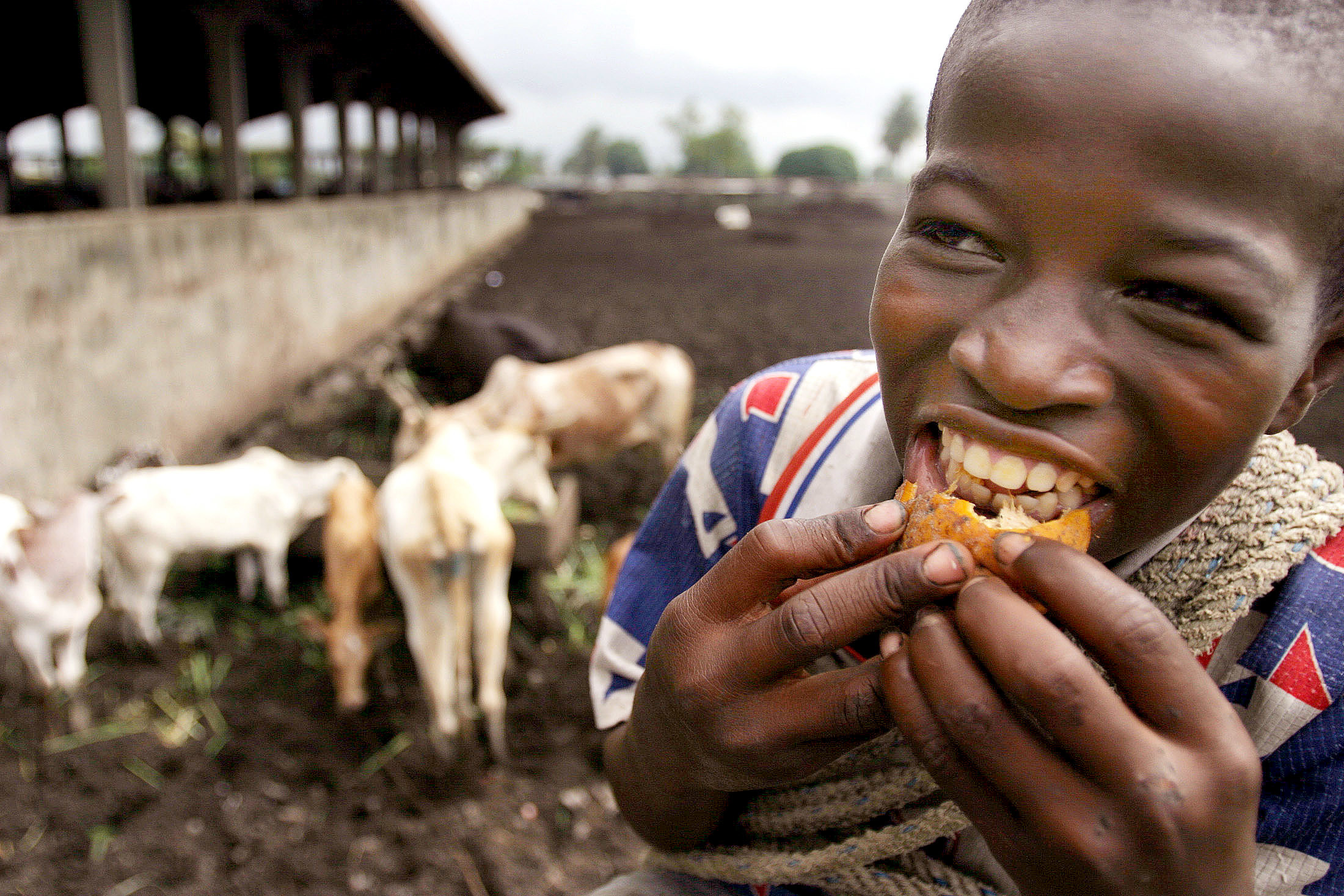 "A boy eats fruit at a cattle slaughterhouse in the main city of Abidjan in Ivory Coast July 5, 2005. African Union (AU) heads of state urged a summit of rich nations to act rapidly to end poverty on the continent, saying they should implement all the proposals of a British-backed report on aid, trade and debt. ""The Assembly (of AU leaders) fully supports the recommendations contained in the Commission for Africa report,"" read a resolution issued to reporters at the pan-continental organisation's half-yearly gathering of leaders. The report, commissioned by British Prime Minister Tony Blair for consideration by Group of Eight (G8) leaders meeting in Scotland on Wednesday and Thursday, calls for freer trade, a big rise in aid and debt cancellation. REUTERS/Thierry Gouegnon)  FOR/DY - RP6DRMVFQWAB"