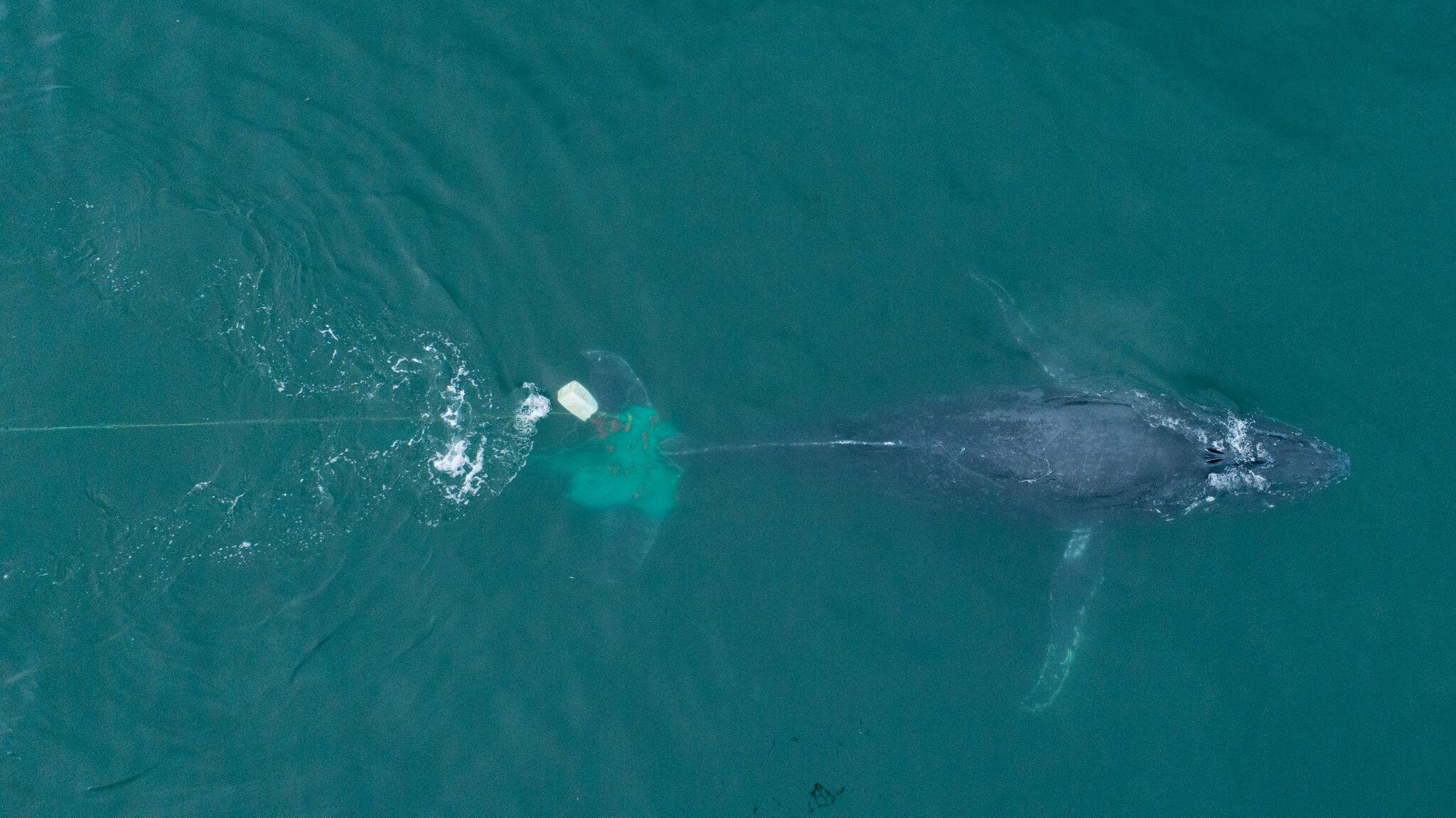 Cada año unos 600.000 mamíferos y 700.000 pájaros marinos quedan atrapados en redes que no están pensadas para capturarlos.