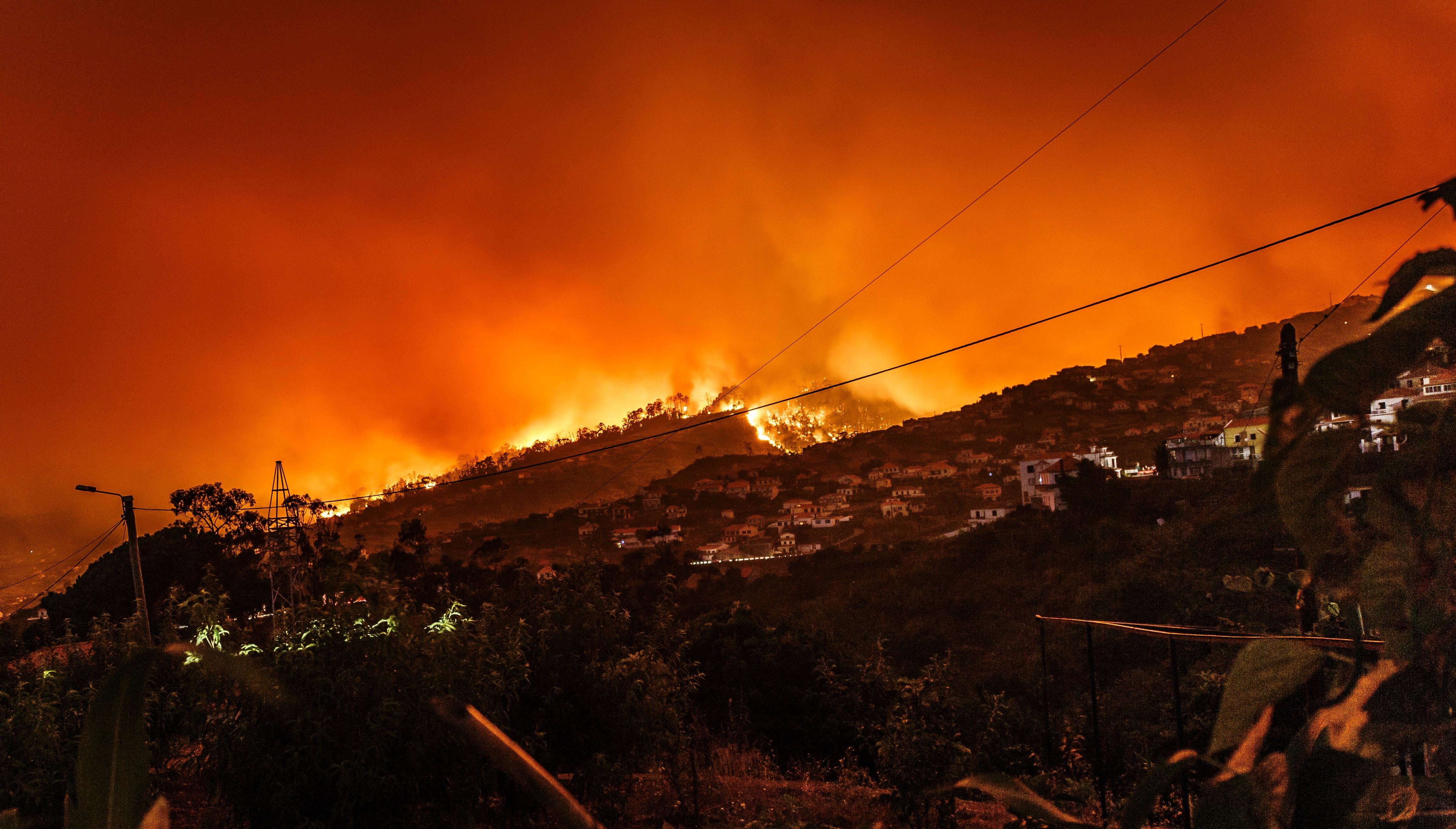 some wildfires, like this one here in Portugal, may actually help forest ecosystems