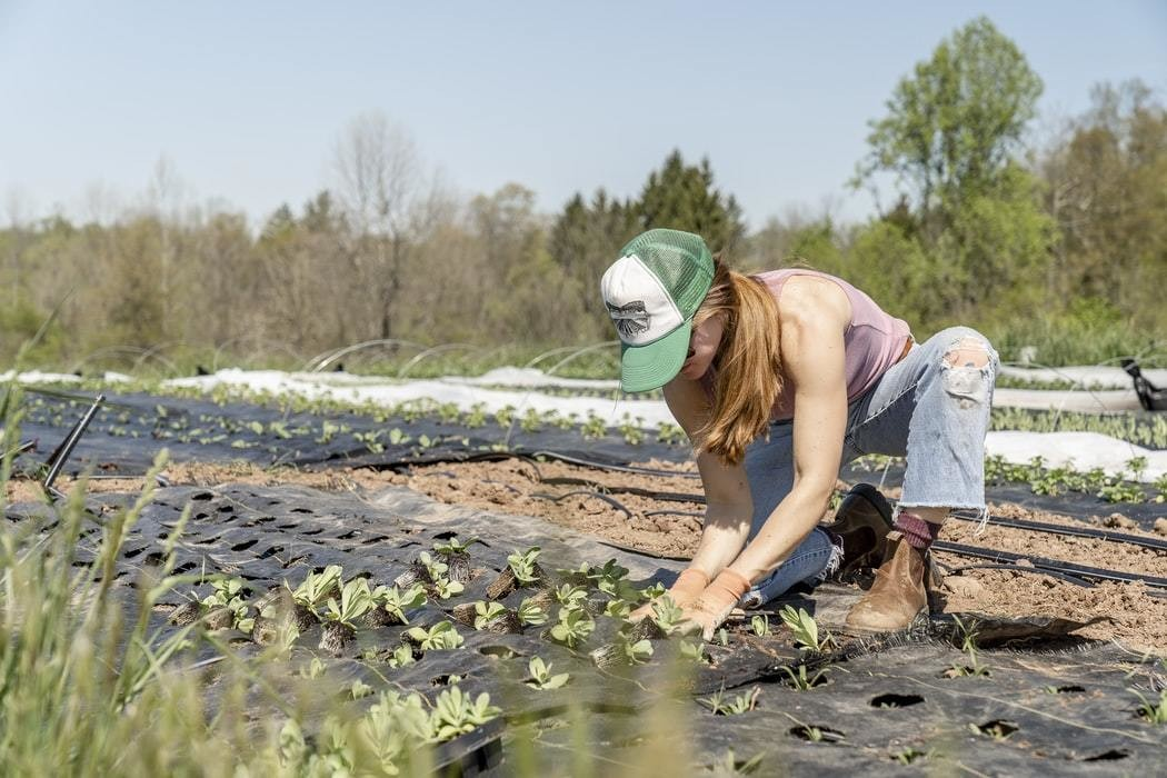 Person works on farm growing vegetables.