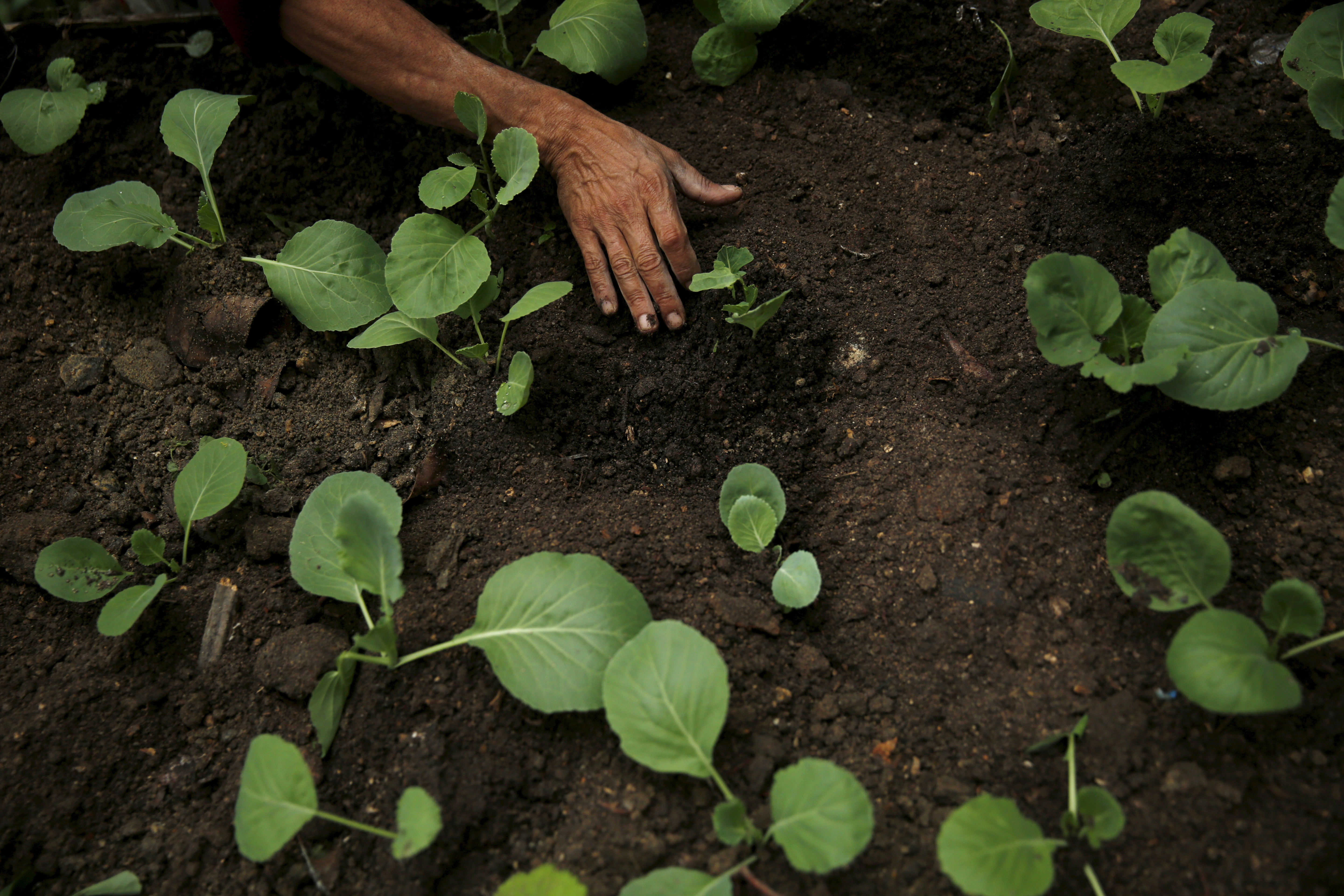 Brazilian Mauro Quintanilla, plants seedlings at the Sitie Ecological Park, that he founded, in the Vidigal slum in Rio de Janeiro, Brazil, June 2, 2015. The Park, that is a reforestation, agriculture and recycling project, was built after removing 16 tons of garbage which people had piled up above the hill, according Quintanilla. REUTERS/Pilar Olivares - GF10000115484